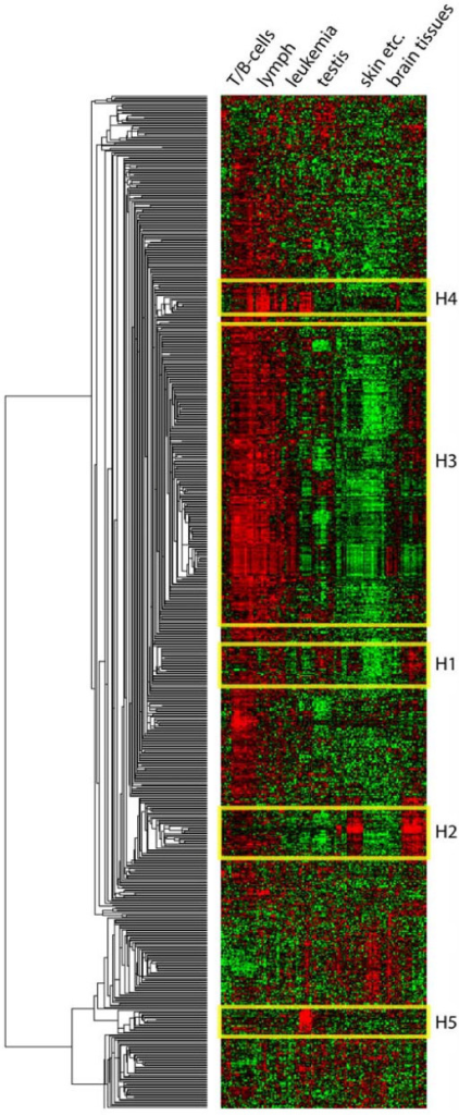 Heatmap of YY1 target gene expression patterns.