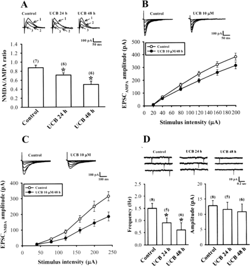 Effect of prolonged UCB exposure on NMDA/AMPA ratio of excitatory postsynaptic currents (EPSCs) and AMPA receptor-mediated miniature EPSCs (mEPSCs).(A) NMDA/AMPA ratio of EPSC (at +50 mV) was determined by subtracting the averaged traces obtained in 50 µM D-APV from those collected in its absence and was found to be significantly lower in slices treated with 10 µM UCB for 24 or 48 h compared with control slices. The intensity of each stimulation was adjusted to evoke the same peak amplitude of EPSCs (≈250 pA) in each slice culture. Representative traces show EPSCs before (1) and after application of D-APV (50 µM) (2) in control and 10 µM UCB-treated slices. The NMDA receptor-mediated component (3) was derived by subtracting the AMPA receptor-mediated component (2) from the compound EPSC (1). (B) Representative traces and input-output curves of AMPA receptor-mediated EPSC (EPSCAMPA; at −70 mV in the presence of 20 µM bicuculline methiodide and 50 µM D-APV) versus stimulus intensity (µA) at the Schaffer collateral-CA1 synapses of hippocampal slice cultures in the absence (control) or presence of 10 µM UCB for 48 h. (C) Representative traces and input-output curves of NMDA receptor-mediated EPSC (EPSCNMDA; at −60 mV in the presence of 20 µM bicuculline methiodide and 20 µM CNQX) versus stimulus intensity (µA) at the Schaffer collateral-CA1 synapses of hippocampal slice cultures in the absence (control) or presence of 10 µM UCB for 48 h. (D) Representative voltage-clamp recordings of AMPA receptor-mediated mEPSCs (at −70 mV in the presence of 20 µM bicuculline methiodide, 50 µM D-APV, and 1 µM tetrodotoxin) from control slices (left) or slices treated with 10 µM UCB for 24 h (middle) or 48 h (right). The bar graphs show mean±SEM of the effects of UCB on the average frequency and amplitude of mEPSCs. Number of experiments is indicated in the parenthesis. *p<0.05 as compared with the control group by one-way ANOVA (Tukey-Kramer test).