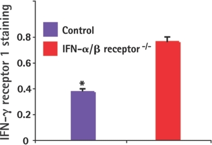 IFN-α/β down-regulated IFN-γ receptors on the surface of infected macrophages.