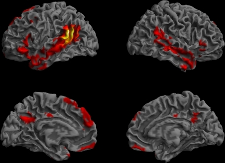 Resting-state functional connectivity pattern for the posterior STS/BA39 region of interest. (Lateral and medial views of the left and right hemispheres, p < 0.01, corrected, cluster extent > 100 mm3, colors indicate t-values, dark red = lowest, yellow-white = highest, with the voxels within the ROI showing the highest correlation).