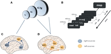 Unitary memory models and associated functional connectivity networks. (A) Unitary memory models posit that perception, WM and LTM do not differ in the underlying neural substrates, but in the state of information representations. Accordingly, two or three states are proposed: a focused of attention (FA); a region of direct access (DA); and other information that is hypothesized to be an activated portion of LTM (aLTM). The last two states are considered to be undistinguishable by some authors leading to two states models (Oberauer, 2002; McElree, 2006; Lustig et al., 2009; Öztekin et al., 2010; Nee and Jonides, 2011). (B) Serial position task (SP) of 12 items used to explore differences among the three hypothesized states, and to investigate underlying neural networks. SP12 corresponds to FA; SP9–11 corresponds to DA; SP1–8 corresponds to aLTM [Adapted from (Öztekin et al., 2010)]. (C) Regions demonstrating functional connectivity increases with right ITG related to the focus of attention [Adapted from Nee and Jonides (2008)]. (D) Some of the regions demonstrating enhanced connectivity with left mid-VLPFC related to aLTM [Adapted from Nee and Jonides (2008)]. Other regions were anterior STG and ventromedial PFC. ITG, inferior temporal gyrus; MTL, medial temporal lobe; OC, occipital cortex; PPC, posterior parietal cortex; STG, superior temporal gyrus; VLPFC, ventrolateral prefrontal cortex.