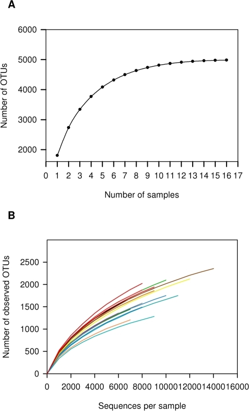 Rarefaction analysis for the assessment of OTU coverage.(A) Sample-based rarefaction curve showing the increase in OTU numbers as a function of the number of individuals sampled. Each added sample adds OTUs to the plot which has not yet been seen in previous samples. The curve becomes asymptotic as the OTU number saturates, and each sample adds an increasingly smaller number of new OTUs, indicating adequate coverage for the environment being tested. (B) Individual rarefaction curves for each rumen sample taken.
