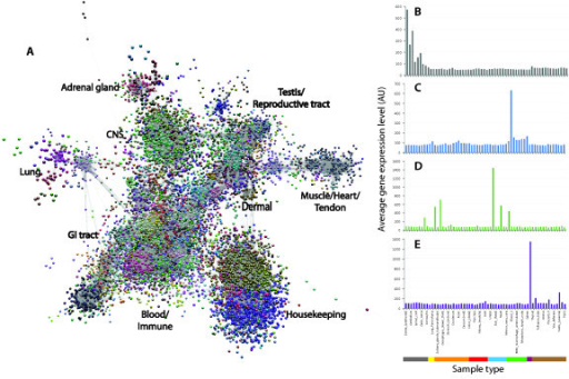Network visualization and clustering of the pig transcriptome. A.Three-dimensional visualization of a Pearson correlation graph of data derivedfrom analysis of pig tissues and cells. Each node (sphere) in the graph representsan individual probeset on the array and the edges (lines) correspond tocorrelations between individual measurements above the defined threshold. Thegraph is comprised of 20,355 nodes (probesets) and 1,251,575 edges (correlations≥0.8). The complex topology of the graph is a result of groups ofco-expressed genes forming cliques of high connectivity within the graph.Clustering of the graph using the MCL algorithm was used to assign genes to groupsbased on coexpression. By inspection of the underlying profiles, areas of thegraph can be associated with genes expressed by specific tissue or cellpopulations. Plots of the average expression profile of genes in selected clustersare given on the right: B. profile of cluster 4 genes whose expression isrestricted to brain and spinal cord; C. profile of cluster 7 genes whoseexpression is highest in blood; D. profile of cluster 10 genes whoseexpression is restricted to skeletal muscle; E. profile of cluster 22 geneswhose expression is highest in the adrenal gland. MCL, Markov clusteralgorithm.