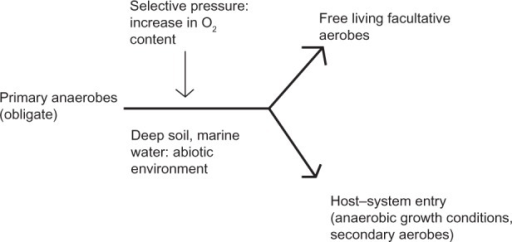 Possible selective pressures on primary anaerobes for sustainable environments. Selective pressure-like increases in O2 content in anaerobic environment, in deep soil, marine water, and so on lead to the evolution of microaerophilic, facultative anerobes, as well as facultative aerobes and obligate aerobes. Some facultative anaerobes later on found optimum living systems in the human gut due to constant association.