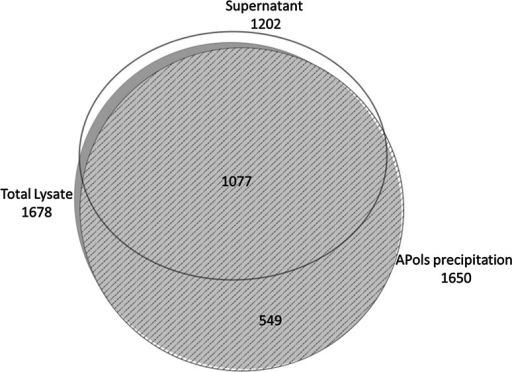 Overlaps between the proteins identified in total lysate, APols precipitate and supernatant. The area of each circle is proportional to the actual number of protein identified. The diagram was plotted using eulerAPE (http://www.eulerdiagrams.org/eulerAPE/)