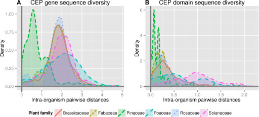 A comparison of CEP gene (A) and CEP domain (B) sequence diversity between seed plant families. These density plots of sequence diversity graph the distributions of pairwise genetic distances of CEP genes and domains within a single organism, aggregated by plant family. Genetic distances were calculated based on the AA sequences, using a maximum likelihood estimation. Tukey's test reveals that both CEP gene and domain sequence diversity is significantly greater in all angiosperm families than in the gymnosperm family Pinaceae (P < 0.001). Additionally, the CEP gene and domain sequence diversity of Poaceae and Solanaceae are significantly (P < 0.05) greater than in other angiosperm families.