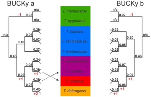 Primary concordance trees resulting from the Bayesian concordance analysis in BUCKy for the genus Triturus, based on 38 nuclear markers positioned in 3′ untranslated regions, sequenced for 20 individuals.Support values represent concordance factors, i.e. the proportion of gene trees in which clades are present; n/a is not applicable. Relationships within species are not shown. Analyses a and b reflect two different input files used which, for heterozygote marker-individual combinations, include either one or the other allele. The inferred position of the root for Triturus is shown. Background colors reflect variation in the number of rib-bearing pre-sacral vertebrae characterizing Triturus morphotypes as in Fig. 1 and the character stage changes required are noted in red.