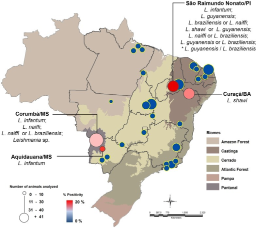 Map of the distribution of Leishmania species infecting caviomorph rodents in Brazil.Blue markers indicate municipalities where caviomorph rodents were collected, but were all negative in the molecular assay. Red markers indicate municipalities with animals positive for Leishmania infection. * Sample with high value between distinct species of Leishmania was considered as a result of hybrid or mixed infection.