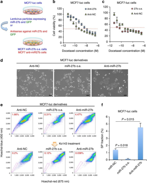 MiR-27b regulates the resistance of breast cancer cells to docetaxel.(a) Overview of the method used to establish miR-27b knockdown MCF7-luc (MCF7-luc anti-miR-27b) cells. (b,c) Dose–response curves of MCF7-luc anti-NC, MCF7-luc anti-miR-27b and MCF7-luc miR-27b o.e. cells treated with docetaxel. Cell viability was normalized to that of the corresponding cells treated with dimethylsulphoxide (DMSO). The red dashed line indicates the IC50 value. Data are represented as the mean±s.d. of n=3 replicates. (d) Morphologies of the MCF7-luc anti-NC, MCF7-luc miR-27b o.e. and MCF7-luc anti-miR-27b cells. Scale bar, 100 μm. (e) Flow cytometric analyses of the SP fraction of MCF7-luc derivatives in the presence and absence of Ko143. (f) Quantification of the SP fraction of MCF7-luc derivatives. The SP fraction was determined as the difference between the level of Hoechst 33342 staining in the presence and absence of Ko143. Data are represented as the mean±s.d. of n=3 replicates. Statistical significance was determined by Student's t-test.