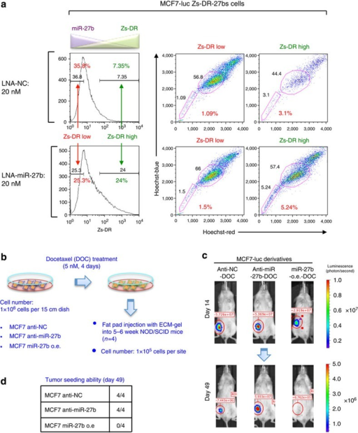 MiR-27b regulates the tumour seeding ability of breast cancer cells.(a) Flow cytometric analyses of MCF7-luc Zs-DR-27bs cells transfected with LNA-NC or LNA-miR-27b. (b) Overview of the method used to analyse the CSC properties of docetaxel-treated MCF7-luc cell derivatives. (c) Bioluminescent images of tumours in NOD/SCID mice injected with docetaxel (DOC)-treated MCF7-luc cell derivatives. Representative images are shown for each cohort. (d) The numbers of animals with detectable tumours in the groups injected with the MCF7-luc cell derivatives.