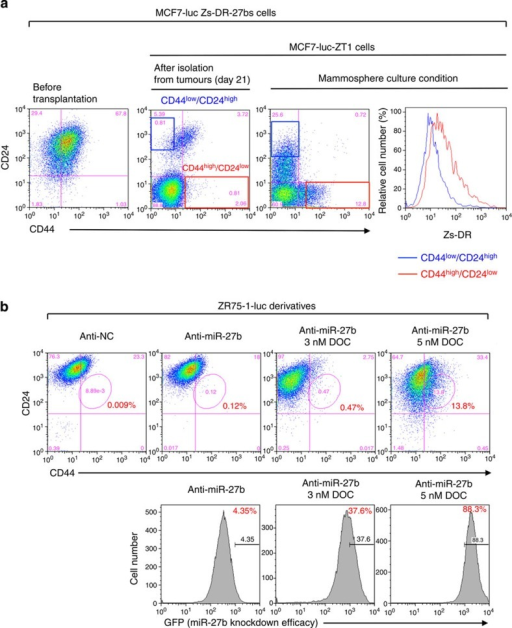 Downregulation of miR-27b is associated with the generation of CD44high/CD24low fraction.(a) Flow cytometry analyses of the CD44high/CD24low population and Zs-DR expression in MCF7-luc Zs-DR-27bs and its tumorigenic cells (MCF7-luc-ZT1 cells) in adherent and mammosphere culture conditions. (b) Flow cytometry analyses of the CD44high/CD24low and GFPhigh populations of ZR75-1-luc anti-miR-27b cells treated with docetaxel (DOC).
