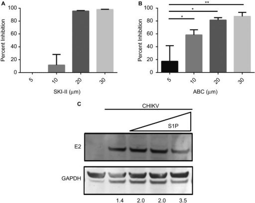 SK2 inhibition impairs CHIKV infection. (A and B) HepG2 cells were pretreated for 2 h with 5, 10, 20, or 30 µM of SKI-II (A) or ABC (B) then infected with CHIKV at an MOI of 5. At 48-h postinfection, cells were fixed and analyzed for infection by high-content confocal microscopy. Values represent mean + SEM (n = 3). *P < 0.05, **P < 0.01 (C) HeLa cells were pretreated with either 50, 100, or 500 nM S1P for 15 min then infected with CHIKV at a MOI if 5 for 24 h. Cell lysates were harvested and subjected to Western blot analysis to detect the E2 viral glycoprotein and GAPDH, the relative intensity for each band is shown below.