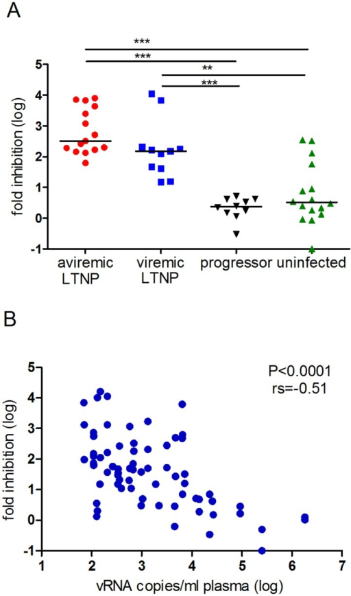 CNAR is strongest in LTNPs and correlates inversely with viral load.(A) CNAR was significantly stronger in SIV-infected LTNPs compared to uninfected macaques and progressors. Viral inhibition was tested with CD8+ cells from 15 aviremic and 11 viremic (geometric mean: 1780 viral RNA copies/ml plasma) long-term non-progressing macaques (LTNPs), 16 uninfected macaques and 10 SIV-infected macaques with progressing disease (geometric mean: 2.41E+04 viral RNA copies/ml plasma). Each dot represents the median of up to 10 viral inhibition tests performed with CD8+ cells from one macaque (mean number of tests per animal: 3.3, STABW = 2.4). Significance (nonparametric Kruskal Wallis test followed by Dunn's test for multiple comparison) is indicated by asterisks (*: p<0.05, **: p<0.01, ***: p<0.001). Median is indicated. (B) CNAR correlated inversely with plasma viral load. Fold viral inhibition (log) was assessed in 70 assays, each performed in triplicate, with CD8+ cells from in total 11 viremic LTNPs and 10 progressors (mean number of assays per animal = 3.3, STABW = 2.8) and correlated significantly with plasma viral load (spearman rank order correlation, p<0.0001, rs = -0.51). Data were taken from S2 and S3 Tables.