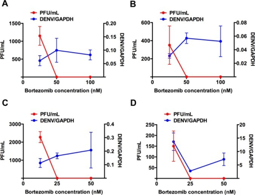 Bortezomib decouples infectious DENV production from viral RNA replication in primary monocytes.Viral RNA genome was detected using qRT-PCR, but no infectious DENV2 was detected using plaque assay in the supernatant of cells treated with higher concentrations of bortezomib for (A) DENV1, (B) DENV2, (C) DENV3 and (D) DENV4. Mean ± SD. N = 4.