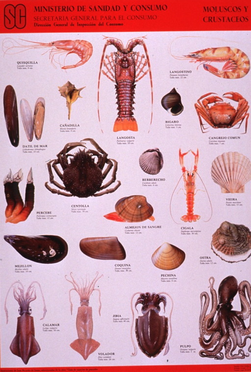 <p>Predominantly white poster with black lettering.  Publisher information and title at top of poster.  Visual images are color illustrations of shellfish, including shrimp, crab, lobster, squid, and octopus.  Note text in lower left corner indicates that the illustrations were selected from a text entitled &quot;Guide to the species of fish and shellfish commonly eaten in Spain.&quot;</p>