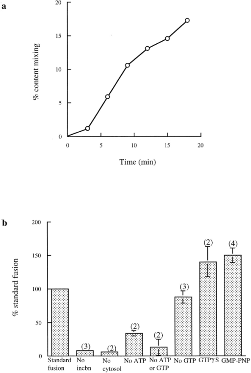 Characterization of content mixing between late endosomes and lysosomes. (a) Time course under standard incubation  conditions, i.e., in the presence of cytosol, an ATP-regenerating  system, 1 mM ATP, and 1 mM GTP. Results are expressed at each  time point as the percentage of the total immunoprecipitable  counts that had been formed within membranous compartments  (i.e., which were immunoprecipitable in the presence of biocytin).  (b) Requirements for the content mixing reaction. Results are expressed as percentages of the content mixing obtained on the  same day under the standard conditions, i.e., in the presence of  cytosol, an ATP-regenerating system, 1 mM ATP, and 1 mM  GTP. 0.2 mM GMP-PNP or guanosine 5′-O-(3-thiotriphosphate  (GTPγS) replaced GTP where indicated. incbn, incubation.