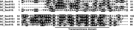 The translocon β subunit is conserved from yeast to human.Amino-acid sequence comparison between translocon beta subunits of S. pombe (SP_Sec61β), S. cerevisiae (SC_Sec61β1 and SC_Sec61β2) and human (HS_Sec61β). Identical amino acids are shaded in black, similar amino acids are shaded in grey. The predicted conserved transmembrane domain is underlined.