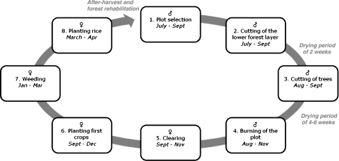 Phases of the shifting cultivation system NLC with timi ...