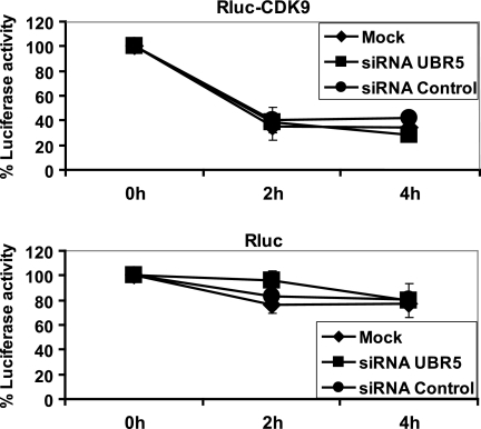 UBR5 knockdown does not affect the stability of CDK9. HeLa cells were co-transfected with constructs driving the expression of RLuc fused to the N-terminal region of CDK9 and with Fluc as an internal normalization control, together with siRNAs targeting UBR5 or control nontargeting siRNAs. Cycloheximide was added to culture medium for 0, 2, and 4 h to block overall protein synthesis, and luciferase activities were measured (upper panel). Parallel control experiments using the Rluc construct alone were conducted (lower panel). Each value represents the average of four assays, including two independent experiments.
