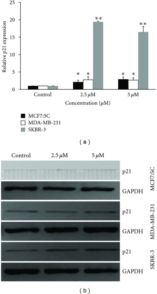 Effect of cucurbitacin B on p21 gene expression. MCF7:5C, MDA-MB-231, and SKBR-3 were incubated for 48 hr with the specified concentrations of cucurbitacin B, and RNA was extracted for real-time PCR to quantitate the expression level of p21. Relative expression levels of p21 mRNA at indicated concentration. Results shown are the average of three independent experiments. *P < 0.05 versus nontreated control, **P < 0.01 versus nontreated control.