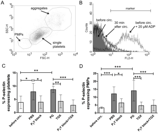 "Blockade of P2Y12 and P2Y1 as well as PI3K p110β inhibition profoundly inhibits hypothermic ECC-induced P-selectin expression on platelets and platelet microparticles.Prior to (""before circ."") and after hypothermic ECC (28°C, 30 minutes) flow cytometric analysis of P-selectin expression on platelets and PMPs was performed in groups treated with either PBS as control, 2-MeSAMP and MRS2179 (100 µM each; ""P2Y block""), propylene glycol (""PG"") as control, TGX-221 to inhibit PI3K p110β (2.2 µM; ""TGX"") or a combination of 2-MeSAMP and MRS2179 (100 µM each) as well as TGX-221 (2.2 µM; ""P2Y block + TGX""). Representative dot plot indicating the identification of PMPs, single platelets and aggregates according to their size and granularity (A). Representative histogram overlay including a marker to identify percentages of P-selectin expressing platelets before circulation without additional stimulation (grey filled), before circulation with addition of ADP (20 µM; grey solid line) as well as 30 minutes after hypothermic ECC (black solid line) (B). Percentages of platelets (C) and PMPs (D) expressing P-selectin are depicted. Data in (C) and (D) are given as means (n = 6) and SD; groups were compared using RM-ANOVA with Bonferroni's multiple comparison test; *p<0.05; **p<0.01, ***p<0.001."