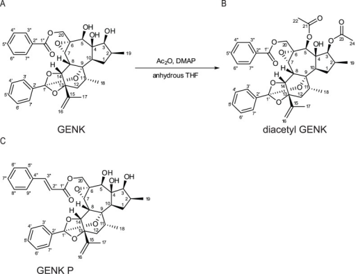 Structure of (A) genkwanine M (GENK), (B) diacetyl GENK, and (C) genkwanine P.(B) Diacetyl GENK was prepared from GENK by treatment with acetic anhydride and DMAP in anhydrous THF.