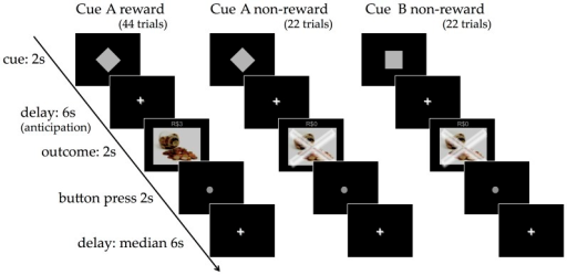 Classical conditioning fMRI paradigm.One of two neutral stimuli (Cue A or Cue B) was followed by an outcome stimulus (reward or non-reward) after a 6-second delay. Cue A was followed by the delivery of the reward 66% of the time and non-reward 33% of the time. Cue B was always followed by non-reward. Participants were told they would receive the equivalent of R$3 for each reward outcome. The length of the inter-trial delay was varied.