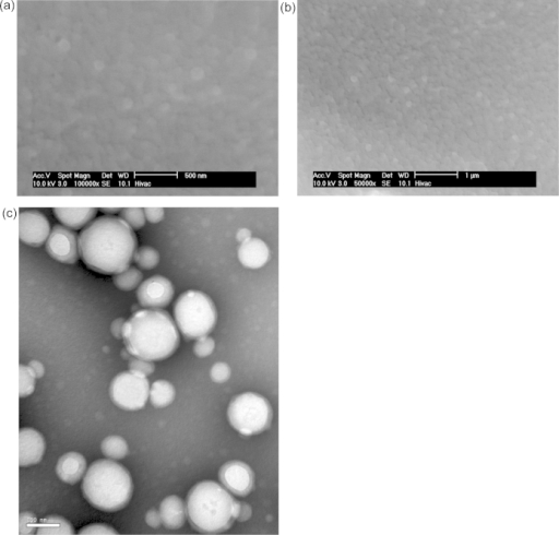 ESEM images of spherical polymer nanoparticles from batch E in the native state. (b) is a zoomed out version of (a). (c) TEM image of nanoparticles from batch E negatively stained with phosphotungstic acid. The images show the size and morphology of the nanoparticles.