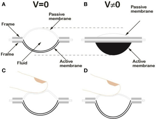 Schematic drawing of the HC-DEA configuration used in this work. Lateral section of the device in the rest state (A). Lateral view of the device in an electrically induced state, due to an applied voltage difference V(B). Loading of the passive membrane of a bubble-like HC-DEA: the internal redistribution of the fluid ensures that the active membrane keeps a uniform profile, both at rest (C) and when a voltage is applied (D).