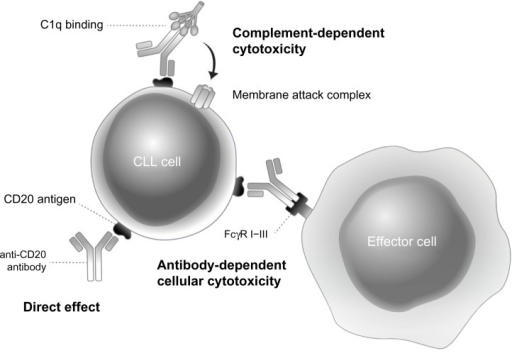 Mechanisms of action of anti-CD20 monoclonal antibodies.Abbreviation: CLL, chronic lymphocytic leukemia.