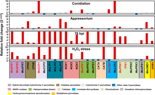 Expression profiling of 27 M. oryzae peroxidase genes during infection-related developmental stages and infection (78 hpi) on rice, and under oxidative stress.Upregulated genes (more than 1.5-fold) are indicated by red bars and downregulated genes (less than 0.5-fold) are denoted by blue bars. The genes not showing differential expression are marked in gray. Seven peroxidase genes were selected for functional analysis are highlighted as red.