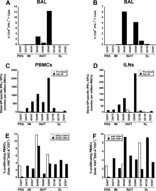 Study 1: Respiratory immunization induces strong antigen-specificT cell responses after administration of a single dose of a formulatedadenovirus-based Ebola vaccine. (A) Quantitative analysis of Ebolaglycoprotein-specific CD4+ T cells in BALfluid. Cells were isolated from whole blood 20 days after immunizationand stimulated with a peptide library for Ebola glycoprotein or peptidesspecific for the MHC class II associated invariant chain peptide thatbinds the MHC class II groove of cells (h-Clip, negative control).Positive control cells were stimulated with PMA and ionomycin. Eachcell population was stimulated for 5 h, stained for phenotypic markers,and analyzed by flow cytometry. (B) Quantitative analysis of Ebolaglycoprotein-specific CD8+ T cells in BALfluid. Cells were treated as described for Panel A. (C) Magnitudeof the antigen-specific response of mononuclear cells isolated fromwhole blood of macaques. PBMCs were isolated 20 days after immunizationfrom whole blood and evaluated for IFN-γ secretion after stimulationwith an Ebola GP-specific peptide library by ELISpot. (D) Magnitudeof the antigen-specific response in mononuclear cells isolated fromiliac lymph nodes (ILNs) of primates. MNCs were isolated 20 days afterimmunization from ILNs and evaluated for IFN-γ secretion afterstimulation with an Ebola GP-specific peptide library by ELISpot.(E) Proliferative capacity of Ebola GP-specific T cells collected38 days after immunization of naive primates by various routes. Theproliferative capacity of CD4+ (white bars) and CD8+ (black bars) T cells isolated from whole blood was evaluatedfor each animal by stimulation for 5 days with an Ebola GP-specificpeptide library and subsequent staining for Ki-67, an intracellularmarker for proliferation.59 (F) Proliferativecapacity of adenovirus serotype 5-specific T cells after immunizationby various routes. Cells were isolated from whole blood 38 days afterimmunization and stimulated for 5 days with a first generation adenovirusthat does not contain a transgene cassette (AdNull, MOI 1:1,000).The proliferative capacity of CD4+ (white bars) and CD8+ (black bars) T cells was determined by intracellular stainingfor Ki-67. Animal numbers displayed in each panel and their correspondingtreatments are summarized in Table 1.