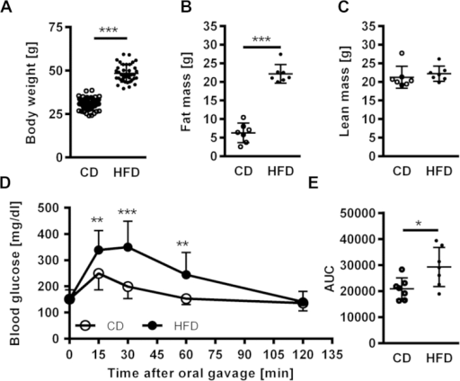 24 weeks HFD feeding causes massive obesity and impaired glucose tolerance. At the age of eight weeks, mice were matched by body weight into HFD and CD groups. Diets were fed for 24 weeks. All parameters were measured at the end of the feeding period. (A) Body weight (n = 38–41), (B) Fat mass (n = 7), (C) Lean mass (n = 7), (D) Oral glucose tolerance test (n = 7), (E) Total area-under-the-curve (AUC) calculated from D as measure for glucose tolerance (n = 7). A, B, C, E was analyzed by Student's t-test. D was analyzed by two way repeated measures ANOVA. Data are presented as means ± SD. * = p < 0.05, ** = p < 0.01, *** = p < 0.001.