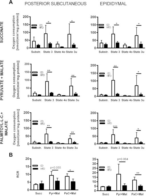 Bioenergetic characterization of isolated mitochondria from posterior subcutaneous and epididymal white adipocytes of mice fed either HFD or CD for 24 weeks: Obesity causes limited oxidative and respiratory capacity. (A) Bioenergetics of isolated white adipocyte mitochondria were measured using three different substrates (complex II linked substrate succinate and complex I linked substrates pyruvate or palmitate). First, respiration was assessed in presence of substrate only (state 4). Phosphorylating state 3 respiration was measured in the presence of ADP and substrate. ATP synthesis was inhibited and state 4o respiration was induced by oligomycin. Addition of the chemical uncoupler FCCP resulted in maximal uncoupled respiration (state 3u). Finally, non-biological background was determined by blockade of electron flow at complex III with antimycin A and subtracted from the other respiratory rates. Data were analyzed by Two-way repeated measures ANOVA (Bonferroni correction). (B) Mitochondrial respiratory control ratio (RCR) was calculated as indicator for mitochondrial integrity. It is defined as the ratio of state 3 to state 4o oxygen consumption (Succ = succinate, Pyr = pyruvate, Mal = malate, PaC = palmitoyl-l-carnitine). Data were analyzed by Student's t-test. Data are presented as means ± SD of 3–4 experiments.*p = 0.05, ** = p < 0.01, *** = p < 0.001.