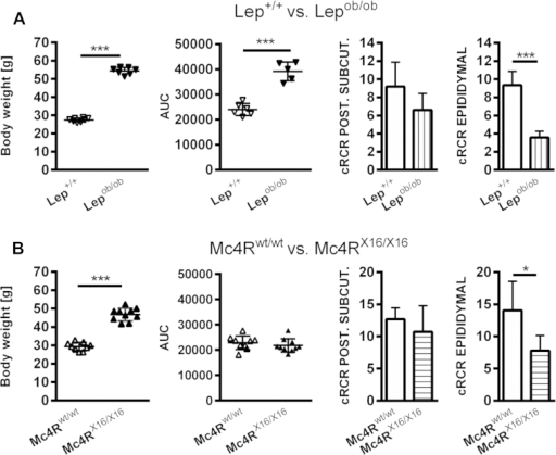 Monogenetic models of obesity: Differences in glucose tolerance but similarities in white adipocyte mitochondrial OXPHOS capacity. (A) Comparison of Lepob/obmice and Lep+/+littermates. Lepob/ob mice show massive obesity and impaired glucose tolerance measured by total area-under-the-curve (AUC) (n = 5–8). (B) Comparison of Mc4RX16/X16and Mc4Rwt/wtlittermates. Mc4RX16/X16 mice show massive obesity but normal glucose tolerance measured by total area-under-the-curve (AUC) (n = 5–9). (A) and (B) Mitochondrial integrity in epididymal white adipocytes is affected in both models as indicated by lowered cell respiratory capacity (cRCR). All data were analyzed by Student's t-test. Bars are presented as means ± SD. p < 0.05, *** = p < 0.001.