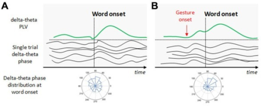 Illustration of the potential effect of beat gestures on the delta-theta phase resetting. (A) At the beginning of speech, neural populations in the auditory cortex spontaneously discharge at delta-theta rates but not at the same phase for a given time point (this is illustrated by the single trial delta-theta band phase before the word onset). At the first word onset, a phase distribution in the auditory sensors shows no preferred angle in the delta-theta band. In consequence, the delta-theta phase locking value (PLV) at the first word onset is weak. With progressive entrainment, delta-theta phase synchronizes, increasing PLV with a preferred angle at relevant syllable/word onsets. (B) Beat onsets systematically precede word onsets and potentially increase the delta-theta entrainment before the arriving word onset. When the relevant gesture onset occurs, delta-theta activity synchronizes with a preferred angle in the phase, increasing PLV before the associated word onset arrives to anticipate its processing.