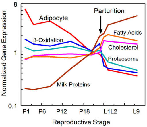 Summary of gene expression during pregnancy and lactation by functional class. Adipocyte specific genes decline throughout pregnancy and early lactation while milk protein genes as a class increase over the same time period. The expression of other classes is stable during pregnancy, possibly representing expression in both the adipose and epithelial compartment and increases two- to three-fold (fatty acid and cholesterol synthesis) or decreases about two-fold (fatty acid and protein degradation) at parturition. Adipocyte genes, red; β-oxidation genes, navy blue; proteosome genes, teal; milk protein genes, brown; fatty acid biosynthesis genes, light brown; cholesterol biosynthetic genes, pink.