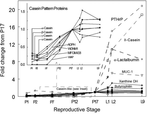 Expression patterns of milk protein genes. The main graph shows genes whose expression increases more than two-fold at parturition. The inset shows genes with casein-like expression patterns whose mRNA increases mainly during pregnancy. All data are normalized to the level of expression at day 17 of pregnancy (P17). ADPH, adipophilin; MFGM, milk fat globule-EGF-factor; PTHrP, parathyroid hormone related protein; WAP, whey acidic protein; WDNM1, Westmeade DMBA8 nonmetastatic cDNA1; xanthine DH, xanthine oxidoreductase.