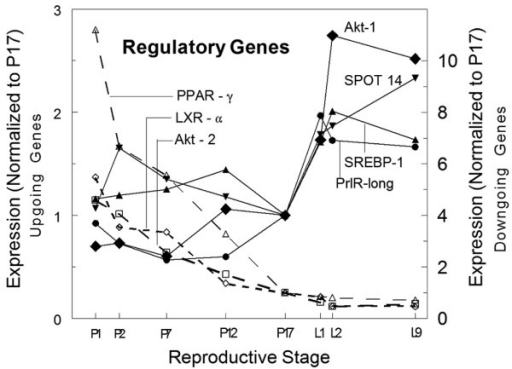 Expression of regulatory genes during secretory differentiation and activation. Dotted lines show genes that decrease at least ten-fold during pregnancy, consistent with adipocyte localization. The solid lines show genes that increase at least two-fold at the onset of lactation with much smaller changes during pregnancy. These genes are likely to be important in initiating metabolic changes at secretory activation. LXR, liver X receptor; P17, day 17 of pregnancy; PPAR, proliferator-activated receptor; PrlR, prolactin receptor; SREBP, sterol regulatory element binding protein.