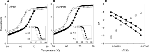 Representative annealing (filled symbols) and heating profiles (open symbols) for the interaction of the singly substituted APdU (A) and DMAPdU (B) containing-oligonucleotides with their intended AT-containing duplex target. The profiles were obtained at a rate of 6°Cmin−1. Fraction folded plots for each triplex are included as insets. The experiments were performed in 50 mM sodium acetate pH 5.0, containing 200 mM NaCl. (C) Representative Arrhenius plots for the association (k1; open symbols) and dissociation (k−1; filled symbols) constants for the APdU (squares) and DMAPdU (circles) oligonucleotides.