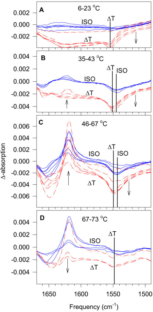 Difference spectra for tobacco thylakoid membranes obtained by calculating D(i) = S(i+1) – S(i) from the series of measured S(i) spectra. Continuous blue curves indicate ISO difference spectra, where the temperature of the two spectra from which these difference spectra were calculated was the same. Red dash-dot curves indicate ΔT difference spectra, where there was about 3°C difference between the spectra from which these difference spectra were calculated. Arrows show the directions of the changes at the given spectrum region upon increasing temperature. Thicker lines show the different minima of the disappearing amide II band in the ISO and the ΔT spectra. The difference spectra of the studied temperature range (6–73°C) are divided into four panels according to their tendencies to change. The intensity scaling in the four panels is the same.