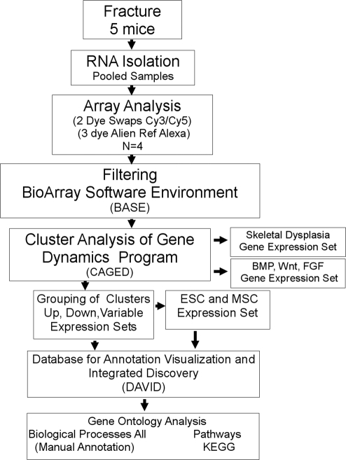 flow chart of the logistics of the array analysis each open i