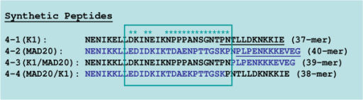 Mapping of dimorphic allelic IgG MSP1 Block 4 epitopes. Human antibodies that reacted with Block 4-1 and 4-3 (black) and with Block 4-2 and 4-4 (blue) recognized allelic sequences indicated by asterisks within the boxed region.