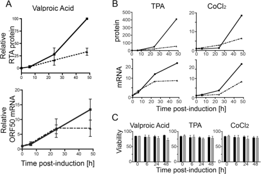 RTA regulation by rapamycin is mediated at both the mRNA and protein level.Messenger ORF50 RNA and RTA protein levels were assessed in BCBL-1 pre-treated with rapamycin for 2 hours, and then induced to lytic reactivation using VPA, TPA, or CoCl2. Samples were collected at 0, 6, 24, and 48 hours post-treatment. (A) Top panel, nuclear extracts were used to determine RTA protein levels at each time point using non-enzymatic, immunoblot quantification and normalization to Ran. Graphs show mean ± s.e.m. of triplicate experiments for DMSO (solid line) and rapamycin-treated (dashed line) samples. Individual experiments were normalized to the maximal protein expression levels in DMSO sample at 48 h post-induction. Bottom panel, total mRNA was also collected for quantitative RT-PCR analysis of ORF50 mRNA from parallel whole lysate samples. Graph shows pooled data from 3 experiments with DMSO (solid line) and rapamycin-treated (dashed line) cultures shown. Means ± s.e.m. (B) BCBL-1 cells treated with rapamycin (dashed lines) or DMSO (solid lines) were induced with either TPA (left panels) or CoCl2 (right panels). RTA protein levels (top) and mRNA levels (bottom) are shown from representative experiments. (C) For each timepoint and induction, viability was determined for both DMSO (black bar) and rapamycin-treated (gray bar) samples by staining an aliquot from each culture with a live/dead exclusion dye and assessing for dye uptake (cell death) by flow cytometry. Graphs show % viable, mean ± s.e.m. of triplicates.