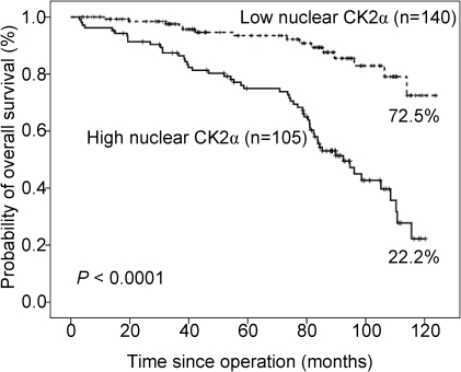 Overall survival analysis of 245 CRC patients stratified by nuclear                            CK2α immunoreactivity (low nuclear CK2α: mean labeling index                            ≤40%; high nuclear CK2α: mean labeling index                            >40%).All statistical tests were two-sided. Significance level:                                P<0.05.