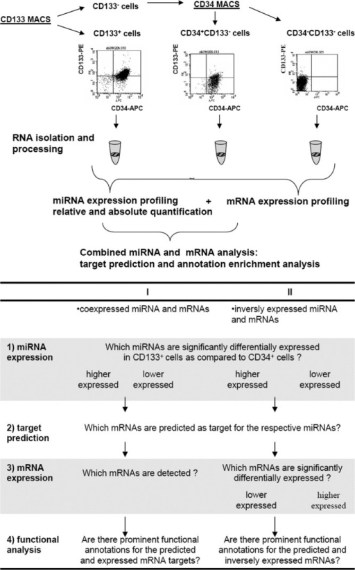 Experimental procedure for miRNA expression analysis in hematopoietic stem cells and hematopoietic progenitor cells. (A): After separation of CD133+, CD34+CD133−, and CD34−CD133− cells, the RNA was isolated and further processed for miRNA or mRNA profiling. Hybridization was carried out using miRXplore microarrays for miRNA analysis and Agilent Whole Human Genome Oligo Microarrays for mRNA analysis. Subsequently, the miRNA and mRNA profiles were used to elucidate the biological function of the significantly differentially expressed miRNAs. (B): Detailed workflow for the combined miRNA and mRNA analysis. Abbreviations: miRNA, microRNAS.