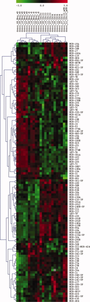 Average linkage cluster of miRNAs expressed in CD133+, CD34+CD133−, and CD34−CD133− (Neg) cells. The cluster was obtained from array hybridizations of different bone marrow subpopulations (n = 5) and leukapheresis samples (mPB, n = 2) versus universal reference. Those miRNAs were included where the net signal intensity of the sample miRNA was onefold over background in at least four of five donors in the CD133+ and/or CD34+CD133− cell population and where the miRNA was present in the UR. Neg +R: CD34−CD133− with RBCs; Neg −R: CD34−CD133− after RBC lysis. Log 2-transformed expression ratios are indicated from −3.0 (green) to 3.0 (red).