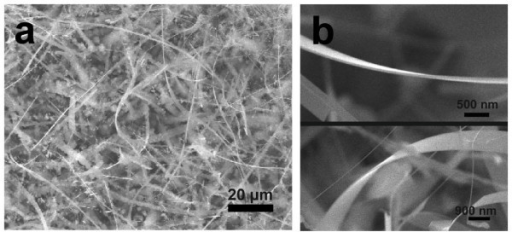 SEM image of Si NRs. (a) Typical SEM image of Si NRs grown on a Si substrate. (b) SEM images of an individual Si NR.