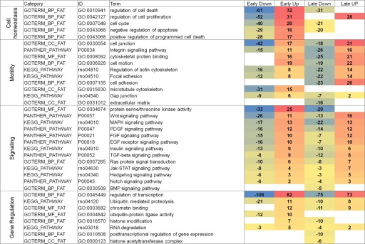 "A summary of major GO categories of miRNA targets. Four individual groups of RNA targets (665, 376, 458, and 380; see Table 1) were analyzed by the use of DAVID GO databases and four groups, including Cell homeostasis, Motility, Signaling, and Gene Regulation, related to lens fiber cell biology are shown. Relative levels of down- and up-regulated genes are shown with negative and no sign, respectively. A total number of genes from each of four columns was calculated and used to rank the ""GO term"" from the greatest to lowest numbers of regulated genes. The individual genes are shown in File S2."
