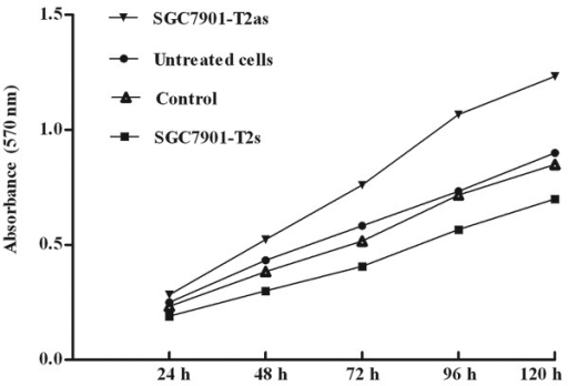 Upregulation of ppGalNAc-T2 inhibits human gastric cancer cell proliferation invitro. SGC7901 cells and their transfectants were cultured in 96-well platesat 5x103/well for 24, 48, 72, 96 and 120 h. Cell growth was assessed by MTTassay.